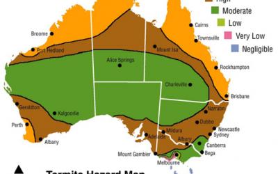 Termite Control – West Indian Drywood Termite